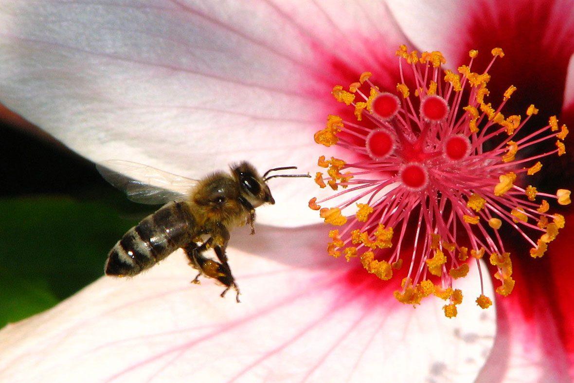 Hjälp bina - plantera sommarblommor!