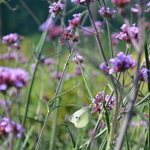 Bra blommor för bin