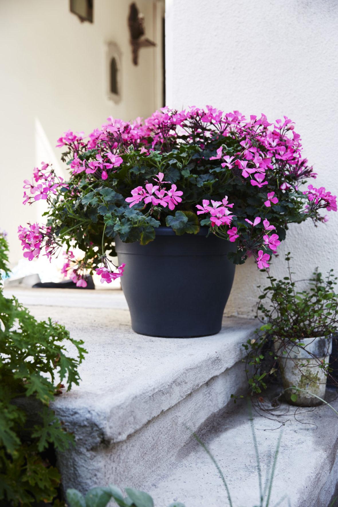 Blomsterfrämjandet 5 (2) (2)