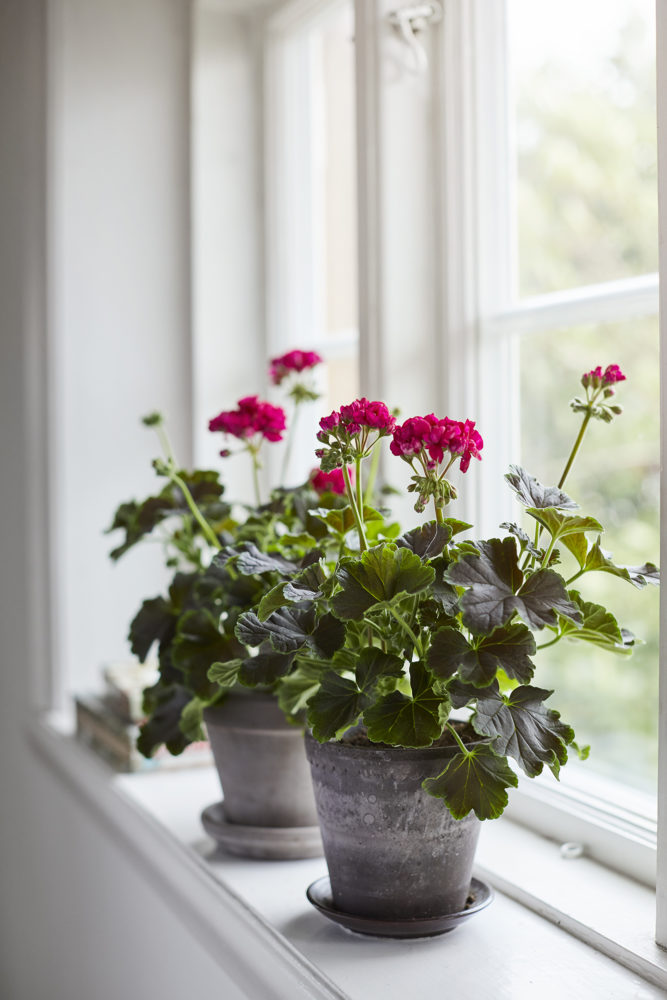 Lina Arvidsson Fotograf_blomsterfrämjandet_3_web