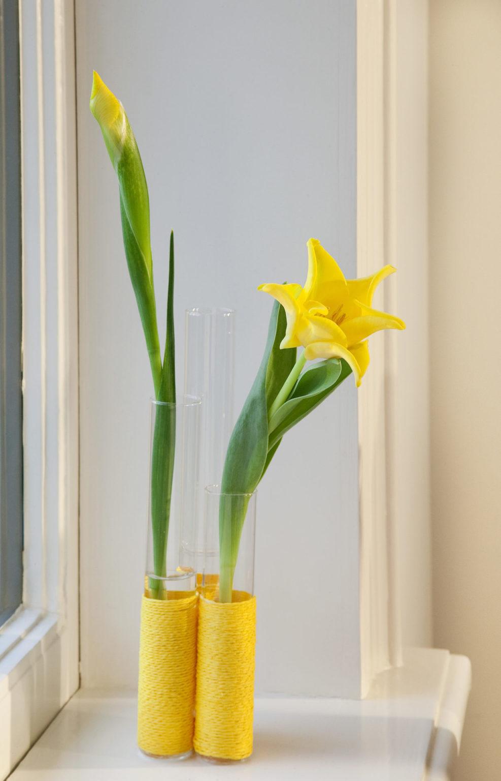 Tulipa  Yellow Crown